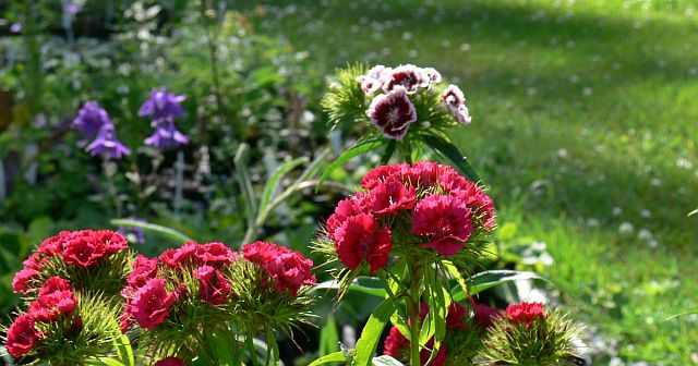 Kasvien valinta luonnon mallin mukaiseen istutukseen