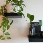 Rostliny z Bažiny: Jak se správně starat o nejznámější pokojovky