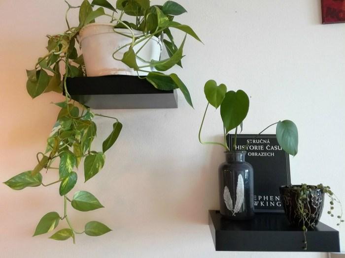 Rostliny z bažiny