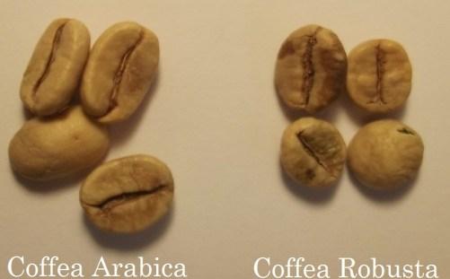 arabika_robusta