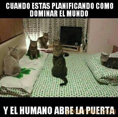 cat domination