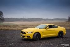 Mustang side blue
