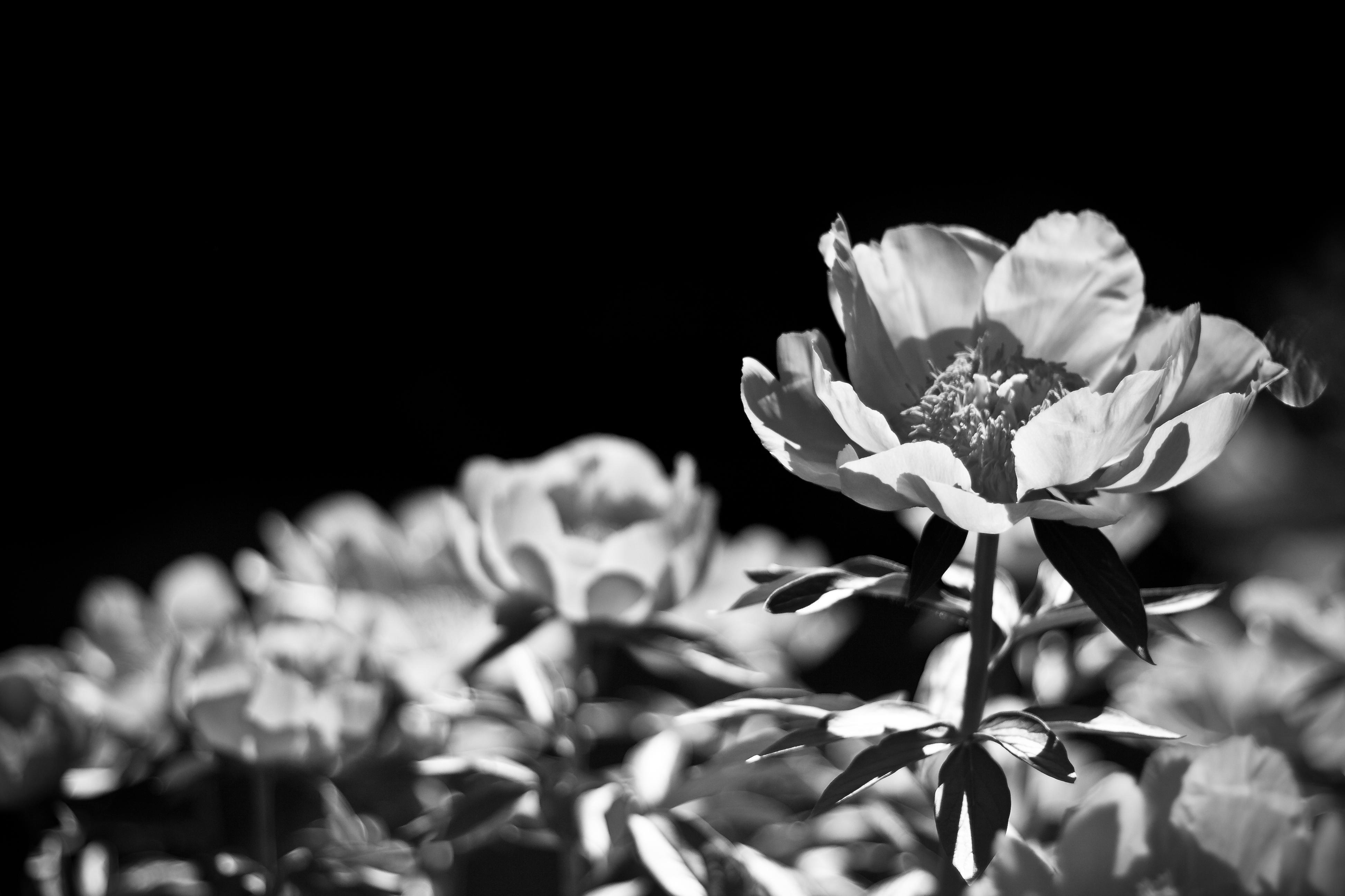 black and white photography  Pikapika20s Blog