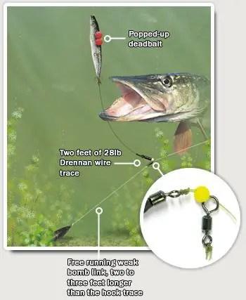 Dead Bait Pike Fishing Ledger Rig