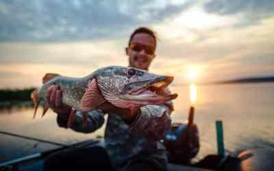 Northern Pike Teeth: Things You Probably Didn't Know