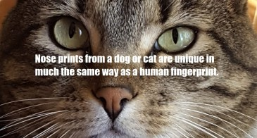 Nose prints from a dog or cat are unique in much the same way as a human fingerprint.