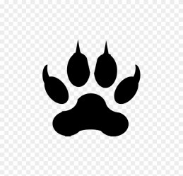 wolf drawings easy drawing cool jaguar pup paw draw clipart step copyright footprint transparent pikpng complaint samplesofpaystubs clipartkey pngio