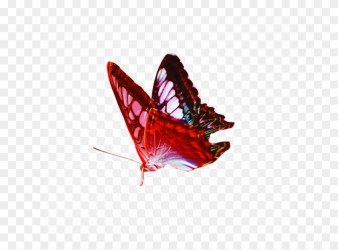 Red Butterfly Png Image Background Transparent Background Png Image Butterfly Clipart #1409929 PikPng