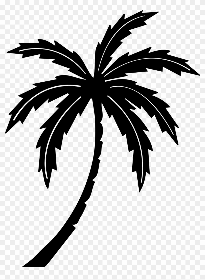 Palm Tree Clipart Black And White : clipart, black, white, Tree,tree,tropic,free, Vector, Graphics,free, Pictures,, Black, White, Clipart, (#1520537), PikPng