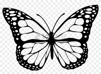 Free Png Download Butterfly White Png Images Background Butterfly Clipart Black And White Transparent Png #2291281 PikPng
