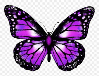 Purple Butterfly Png Transparent Background Butterfly Png Clipart #2902799 PikPng