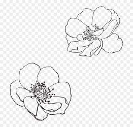 Rose Wild Flower Flowers Pictured Vector Spring Vector Flower Outline Png Clipart #3716271 PikPng