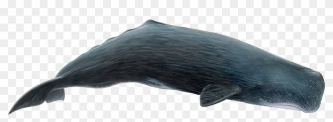 Whale Png Download Image Sperm Whale Whale Png Clipart #502981 PikPng