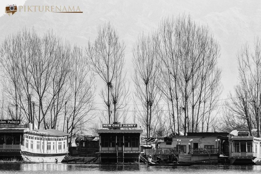 Shikara Ride in Dal Lake 13