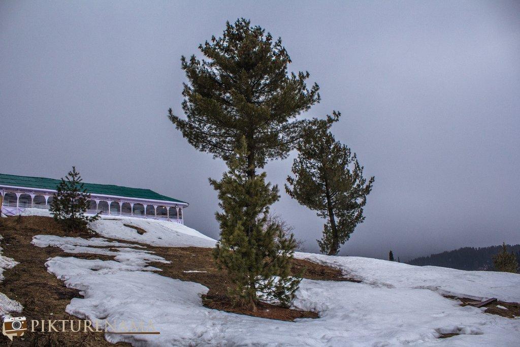 Nedous Hotel Gulmarg Kashmir trees