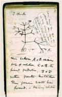 NOTAS DARWIN