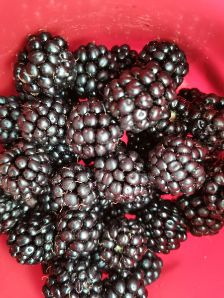 Blackberries are said to be a superfood