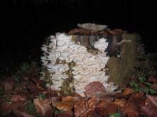 2-pilzsorten-unbekannt5