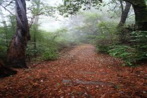 Pilgrims-Path