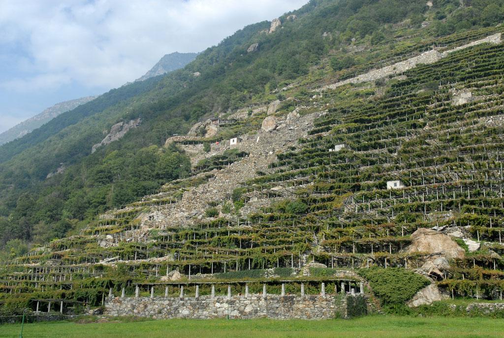 Terraced Vineyards nr Pont St Martin