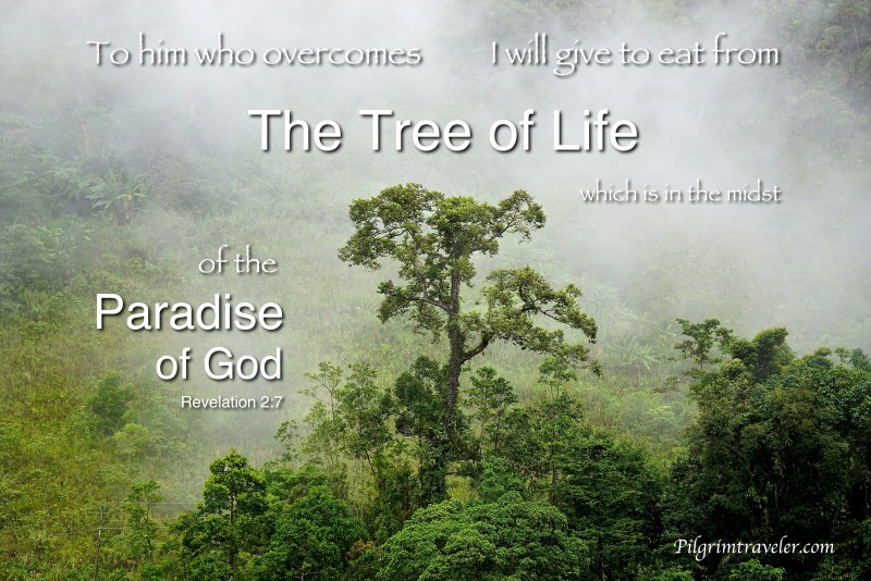 """Revelation 2:7 """"To him who overcomes I will give to eat from the tree of life, which is in the midst of the Paradise of God."""""""