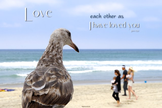 """John 15:12 My command is this: """"Love each other as I have loved you."""""""