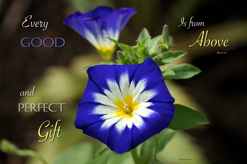 "James 1:17 ""Every good gift and every perfect gift is from above."""