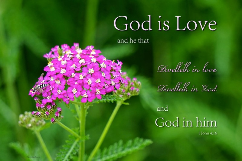 """1 John 4:16 """"God is love and he that dwelleth in love dwelleth in God and God in him."""""""