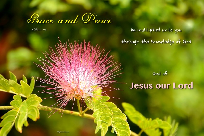 "2 Peter 1:2 ""Grace and peace be multiplied unto you through the knowledge of God, and of Jesus our Lord."""