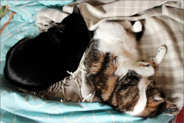 Kassid voodil