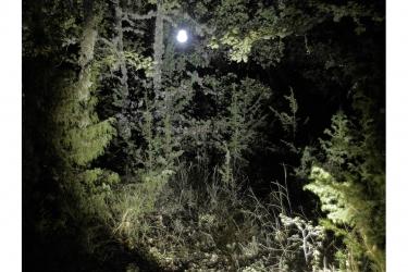 11-nocturne_web