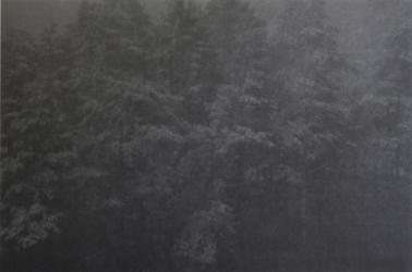 WALD III (series: Locus Amoenus) | 2017 | Fine Art Print (AP) | 90 x 140 cm