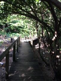 Hike Behind the Rain Forest Café, Marigot Bay, St. Lucia