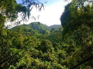 Always scenic, hashing in Grenada
