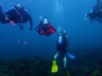Diving the under water sculpture park, Molinere Bay, Grenada