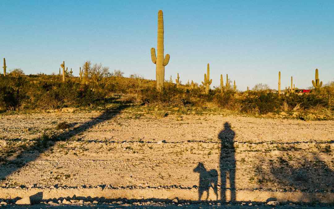 Desert shadow with dog