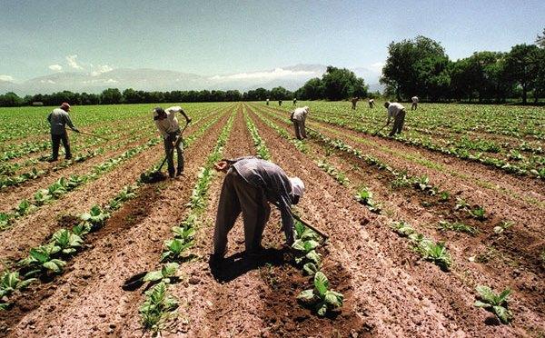 Innovación tecnológica impulsa productividad del sector agroalimentario: Sader