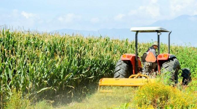Sector agrícola, de los más beneficiados por acuerdo comercial con EUA
