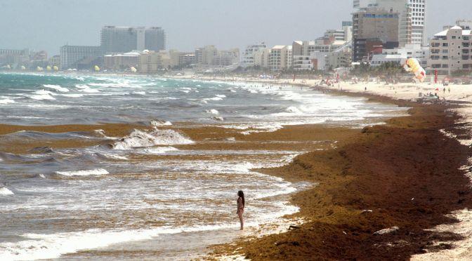 Combate al sargazo requiere mil millones de pesos, estima gobierno de Quintana Roo