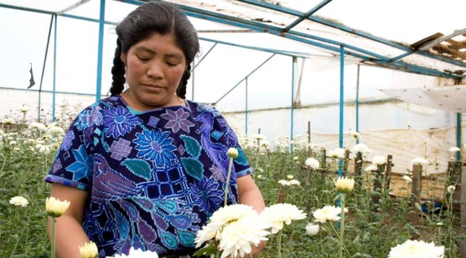 Brecha salarial y baja inclusión frenan productividad de mujeres