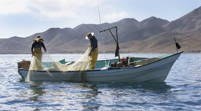 Industria pesquera debe modernizar procesos para crecer