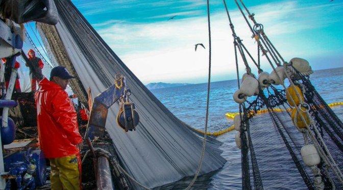 Impulsa Sader estrategia sanitaria en sector acuícola