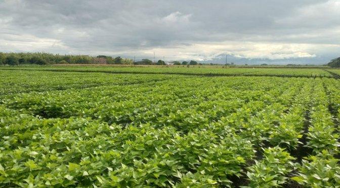 México y Brasil buscan un equilibrio comercial agropecuario