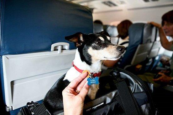 Viajero frecuente, opción para agilizar ingreso de una mascota a México