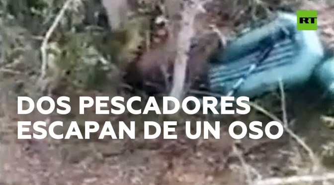 Dos pescadores suben a un árbol para escapar de un oso en Rusia