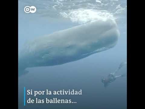 Costo por proteger un ballena