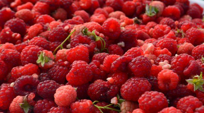 Replicarán en Oaxaca cultivo de berries implementado en Jalisco: Sader