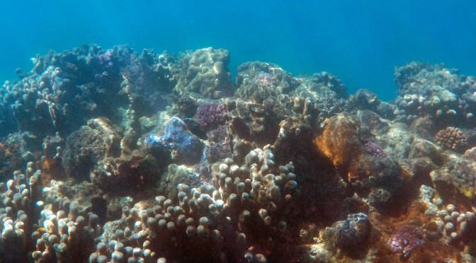 Google, BMW, Volvo y Samsung firman llamado de WWF para la prohibición temporal de la minería de aguas profundas