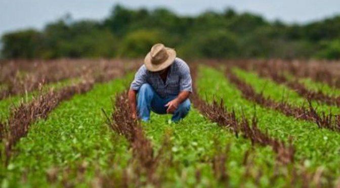 AGROFIBRA se convertiá en la primera FIBRA especializada en el sector agroalimentario en México
