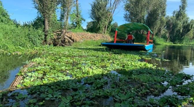 Ciudad de México aprovecha la energía solar para limpiar los canales históricos de Xochimilco